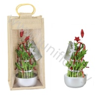 Бамбук Lucky B.3Big Rond In Jute Giftbag+Xmas Stick