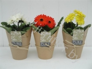 Гербера Gerbera Pure Collection Potkoffer